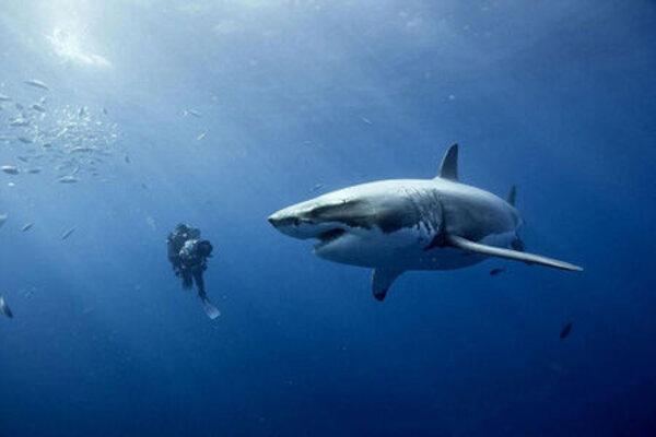 кадры и фото из фильма Океаны