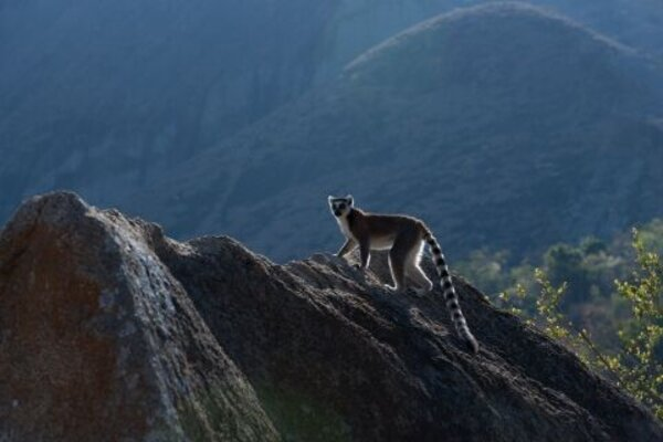 кадры и фото из фильма Остров лемуров: Мадагаскар