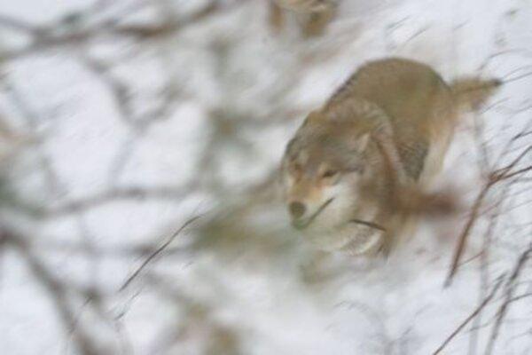 кадры и фото из фильма Весьегонская волчица