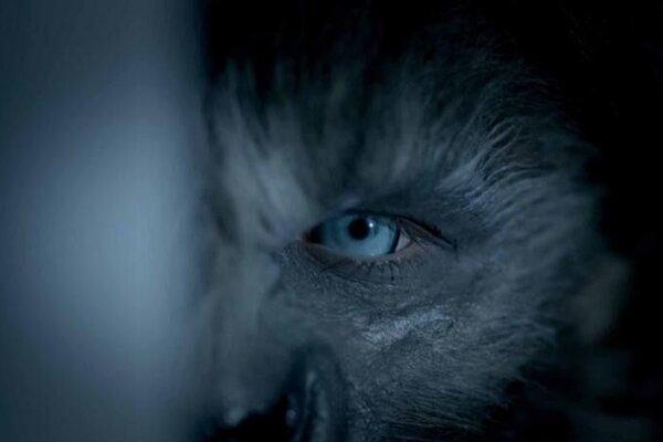 кадры и фото из фильма Волки