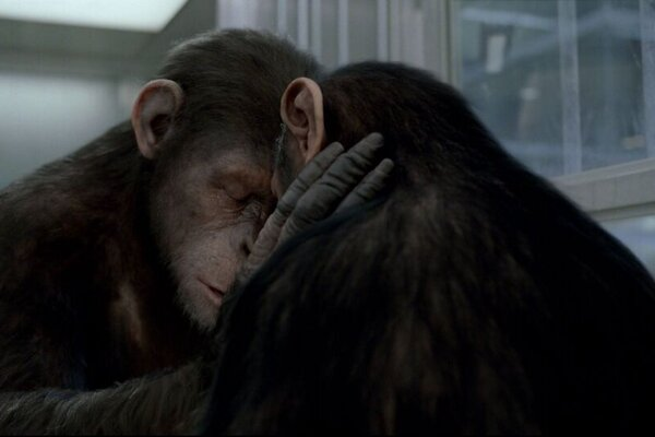 кадры и фото из фильма Восстание планеты обезьян