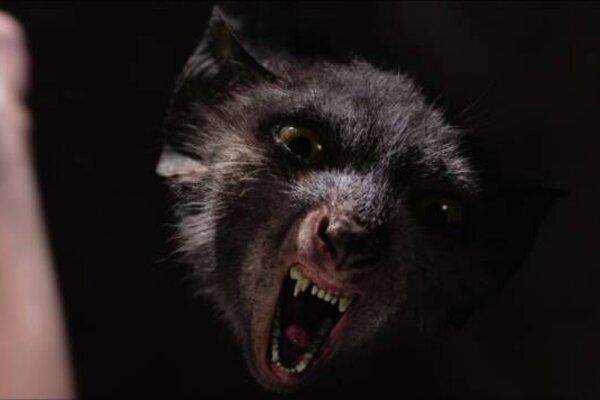 кадры и фото из фильма Он - дракон