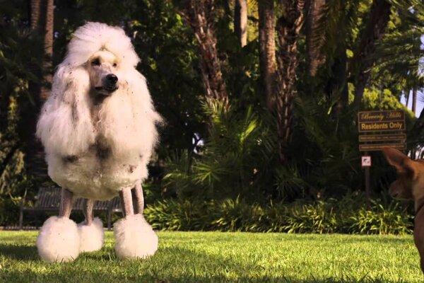 кадры и фото из фильма Крошка из Беверли-Хиллз 2