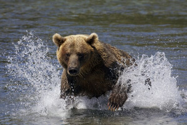 кадры и фото из фильма Земля медведей
