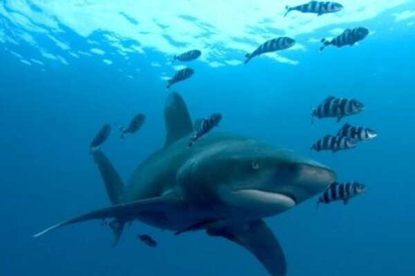кадры и фото из фильма Большое путешествие вглубь океанов 3D: Возвращение