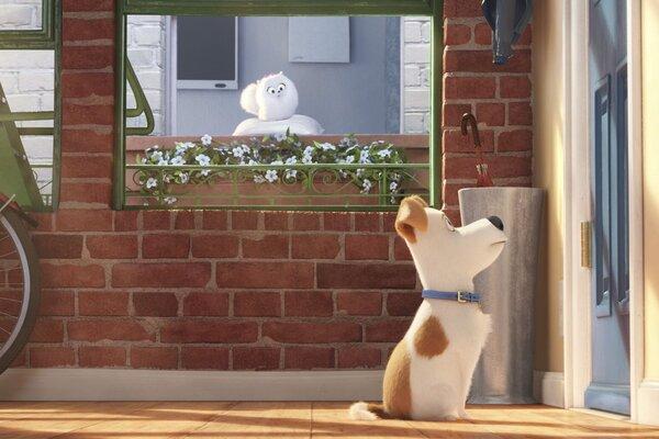 кадры и фото из фильма Тайная жизнь домашних животных