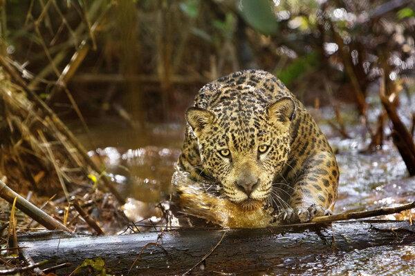 кадры и фото из фильма Амазония: инструкция по выживанию