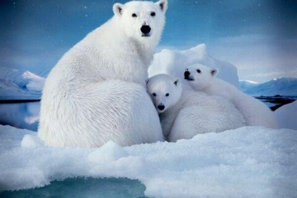 кадры и фото из фильма Арктика IMAX 3D