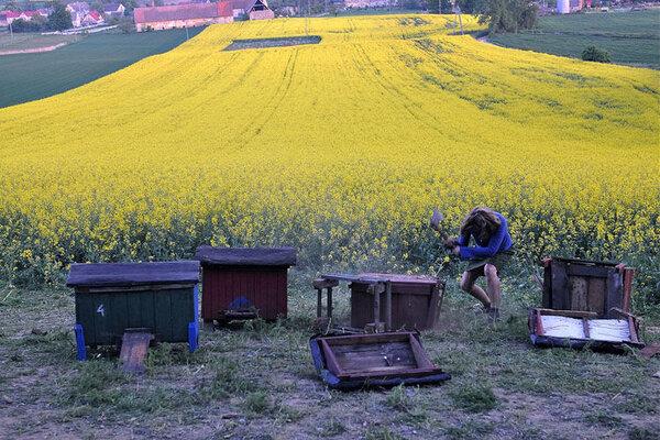 кадры и фото из фильма Афоня и пчелы