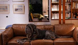 «Моя собака Идиот»: 7 лучших фильмов с участием четвероногих друзей