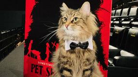 Умер кот, снимавшийся в«Кладбище домашних животных»