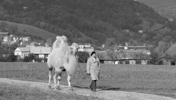 «Большое животное», реж. Ежи Штур © Studio Filmowe ZEBRA