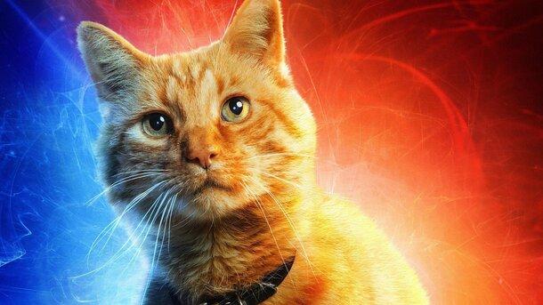 Как Чубакка стала Гусем: Всё что нужно знать о котике капитана Марвел