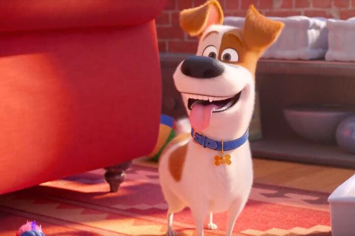 Они слетели с катушек: Первый трейлер мультфильма «Тайная жизнь домашних животных 2»