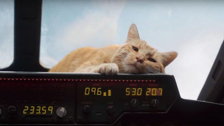 Режиссёр картины «Капитан Марвел» рассказала, почему кошку Гусю сыграл кот