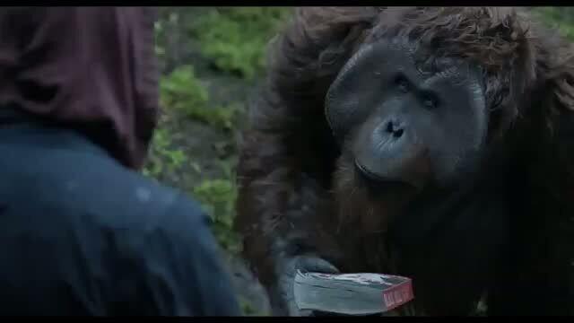 Планета обезьян: Революция - отрывок 2
